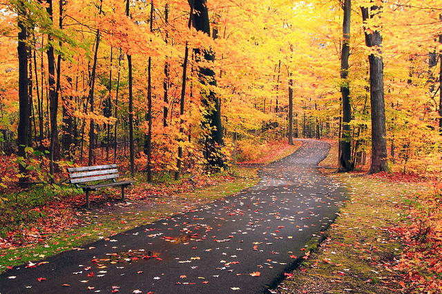 Ah, Autumn In Michigan! 1