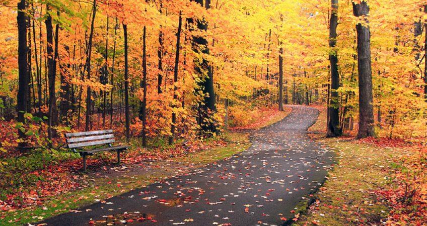 Ah, Autumn In Michigan! 2